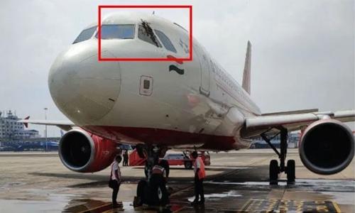 Buzz off! Angry bees delay Air India flight