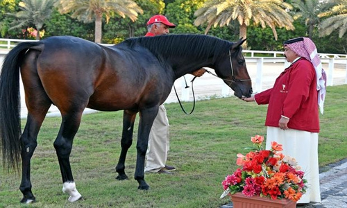 Stage set for 11th Bahrain National Day Arabian Horse Show