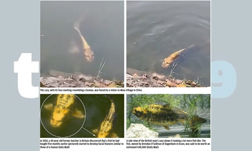 """Something fishy: Fish with a """"human face' spotted in a pond!"""