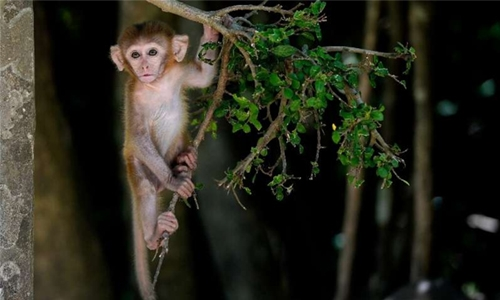 Monkey business: Macaque island draws tourists and criticism