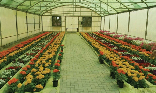 A'ali flower show to bloom from today