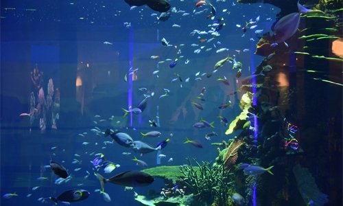 Enjoy experience and learn about marine life at Bahrain Aquarium in Mall of Dilmunia
