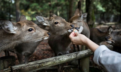 Nine deer dead in Japan after eating plastic: wildlife group