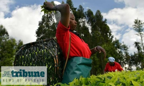 Tea producers turn over a new leaf as prices stumble