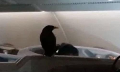 Bird sparks a flap on 12 hr Singapore to London flight