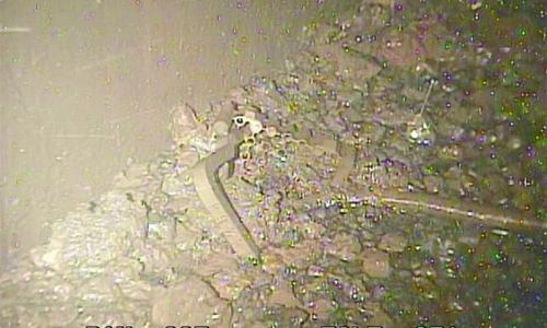 Melted nuclear fuel seen  inside Fukushima reactor