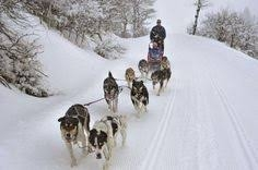 Mayhem and mishaps during Norway's gruelling dog sled race