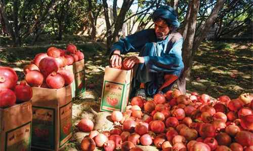 Afghan pomegranate growers squeezed as prices drop