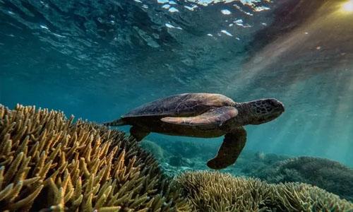 Bahrain, Saudi back Australia on Great Barrier reef
