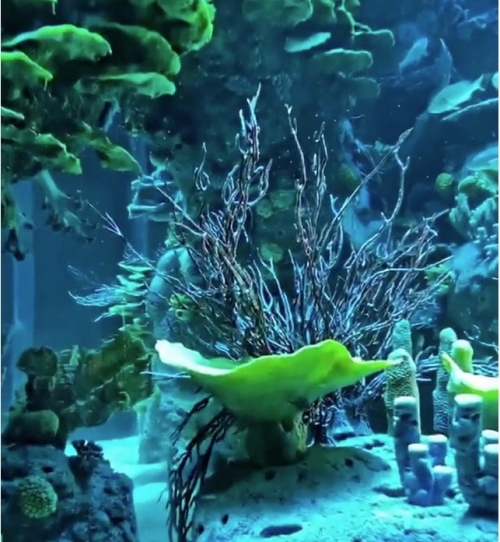 Freediving shows being held at GCC first's cylindrical aquarium