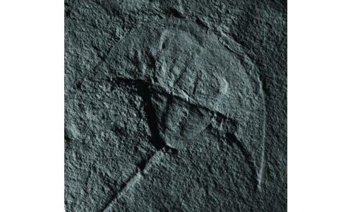 Prehistoric crab that looks just like Darth Vader