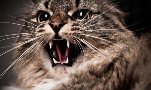 Cat attacks pilot mid Qatar-bound flight, forces plane to make emergency landing