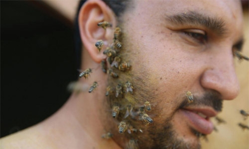 Meet Nabil the bee whisperer
