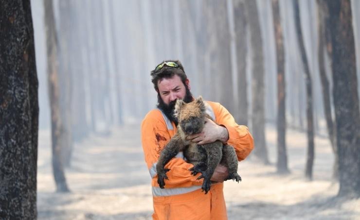 Australia's bush fire season released more CO2 than annual emissions