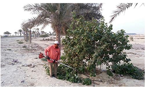 14,565 trees pruned by municipality