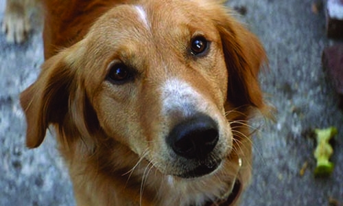 'A Dog's Purpose' filmmakers accused of animal cruelty