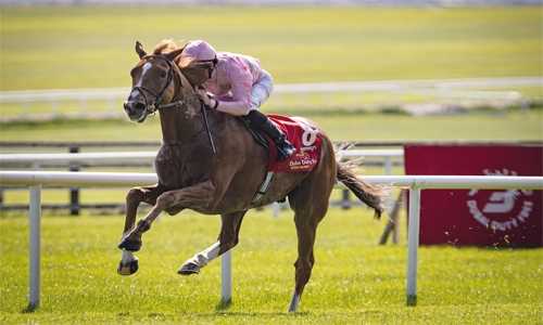 Horses arrive for Bahrain International Trophy