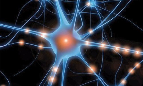 light pulses can control neuron activity