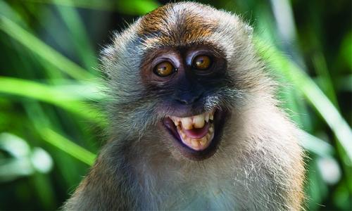 Monkeygate: Volkswagen Suspends Chief Lobbyist Thomas Steg