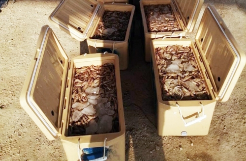 180 kg of shrimp were seized from benthic trawls by Coast Guard