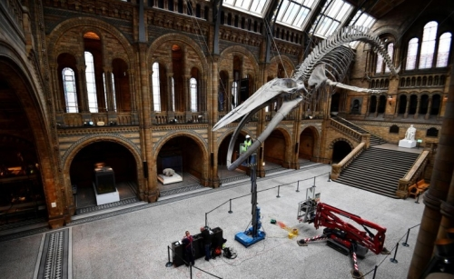 London's Natural History Museum prepares to re-open