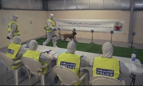 Police dogs to detect COVID-19 cases at Bahrain ports