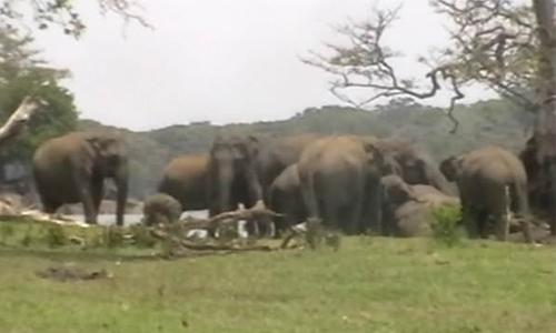 300 elephants pay last respects to their leader