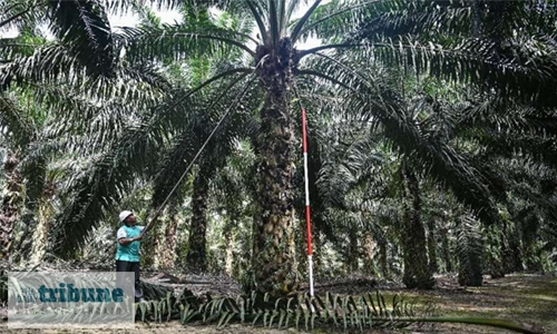 Green palm oil push: Kit Kat, Dove makers could face fines