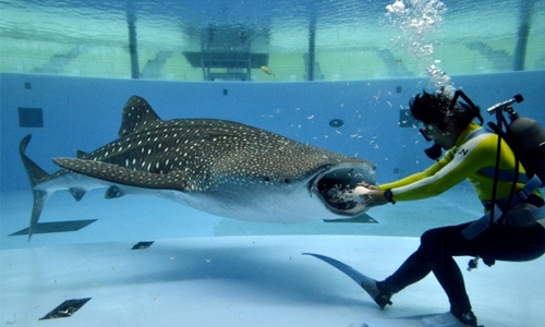 Limavady firm to construct  giant aquarium in Bahrain