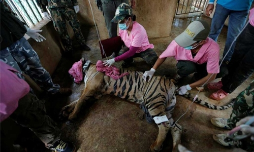 Scores of tigers rescued from infamous Thai temple have died