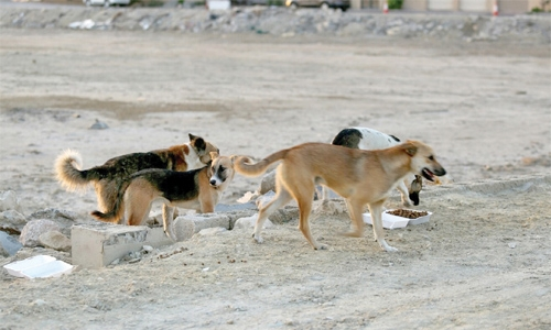 Deport stray dogs to European countries : MP