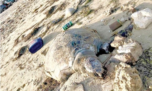 Nature lovers call for action after six turtles found dead