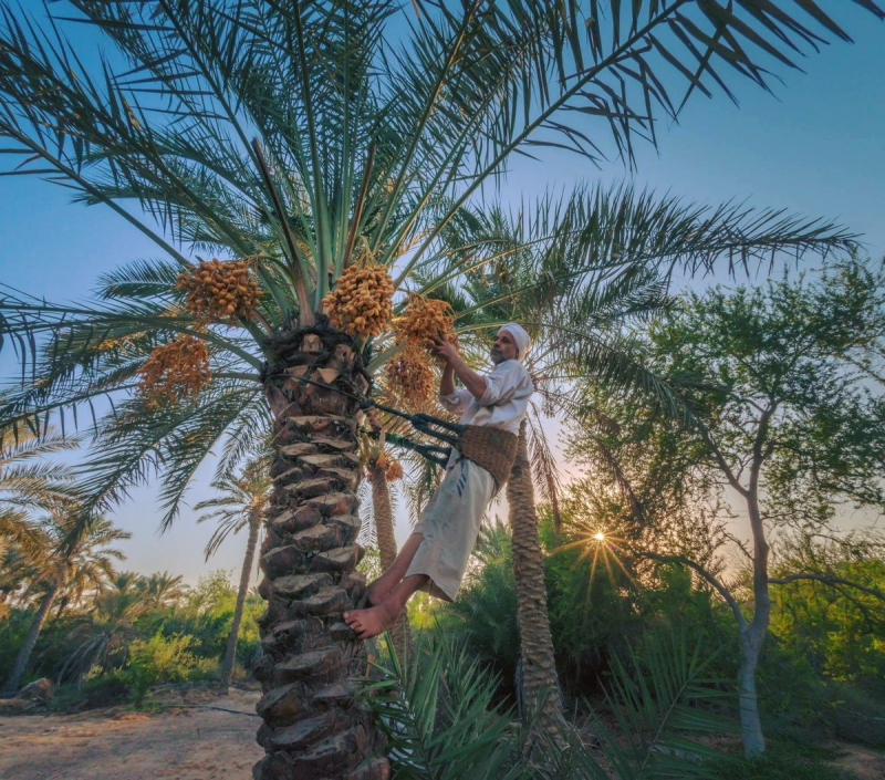Beautifying city streets by protecting palm trees
