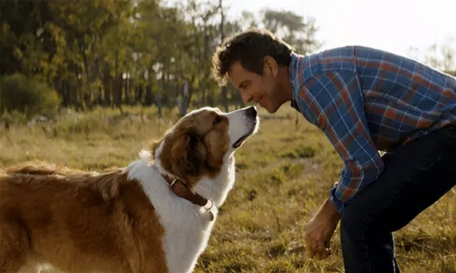 'A Dog's Journey' is weapons-grade tearjerker material for dog lovers