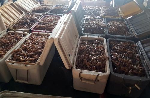 Bottom trawls: Coast guard seizes fishing boat, 240 kg shrimp