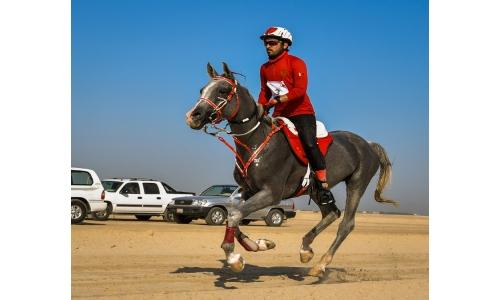 Top Bahrain jockeys excel in endurance horseracing qualifying races