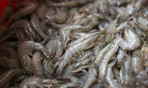 270kg of shrimp seized with boat