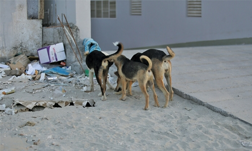 Government to implement plan to tackle stray dogs menace