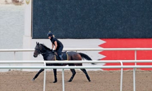 Champion racehorses arrive in Bahrain