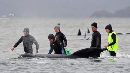 Rescuers release 108 surviving animals
