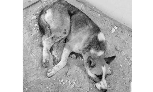 Horrendous attack by schoolboys in Sehla makes a stray dog breathe his last