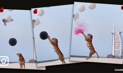 Dubai couple use tiger in gender reveal event, video triggers angry reactions online