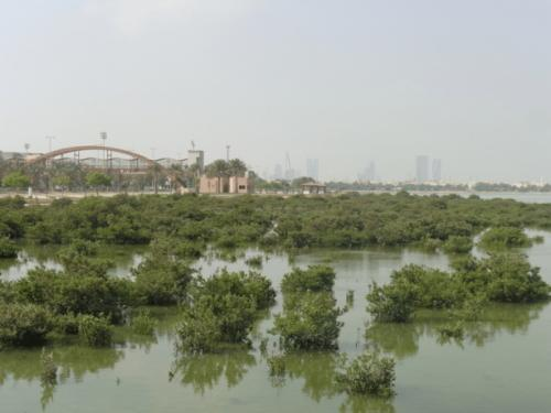 Mangroves tours to Tubli Bay launched