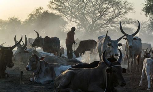 South Sudan's cattle wars
