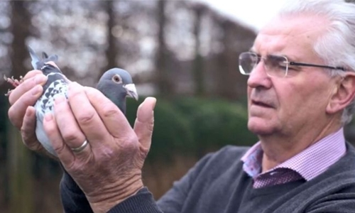 The man with million-euro pigeon