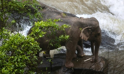 Six elephants drown after slipping off waterfall in Thai park