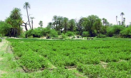 Khayrat Al Bahrain project back on track