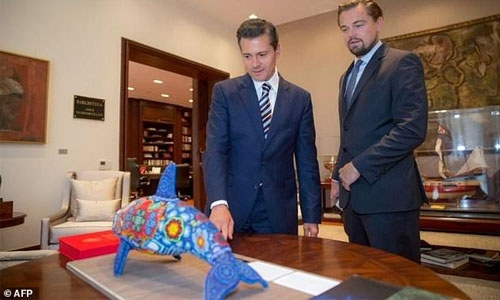 DiCaprio, Mexico in push to save vaquita porpoise