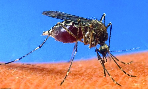 First large-scale malaria vaccine trials for Africa