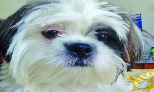Pet owner accuses vet clinic of negligence